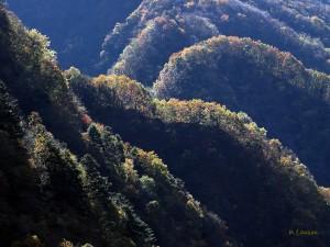 秋の山並1