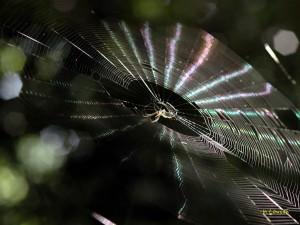 虹色のクモの巣1