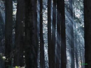 森の中の霧1