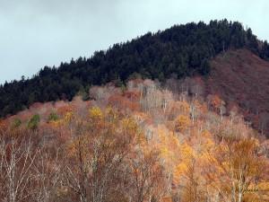 紅葉の尾瀬の山1
