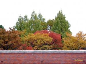 煉瓦と紅葉1