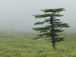 草原の木1