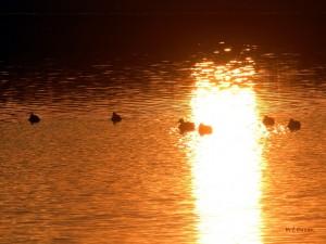 水辺の夕景1